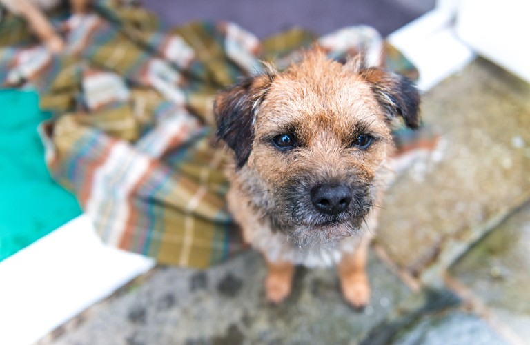 Dog Friendly Hotel in the Lake District